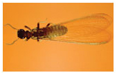Earth Guard Bug