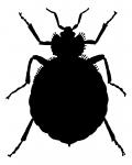bedbugCS2343829