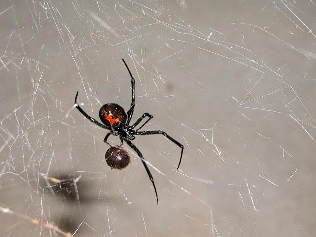 Your Friendly Neighborhood Spider