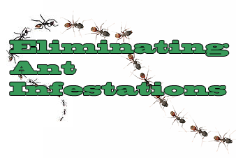 Eliminating ant infestations graphic