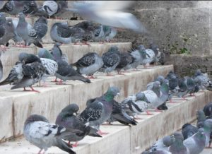 pigeons on concrete stairs