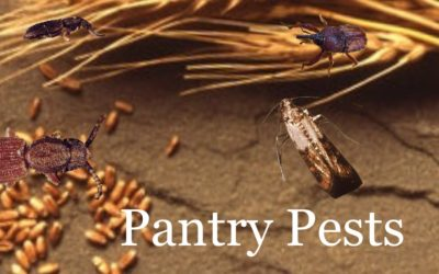 Don't Let Pantry Pests Ruin Your Holiday Parties!