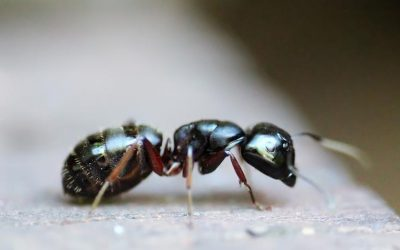 Ten Fun Facts about Ants