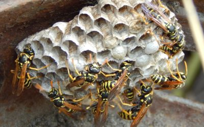 Some Wasps are party animals!