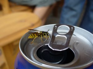 yellow jacket on top of a soda can