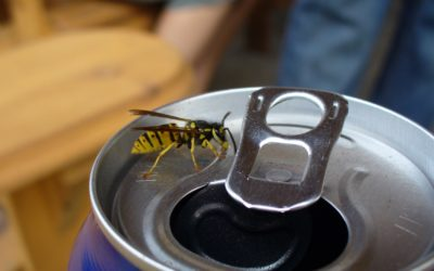 Yellow Jackets are more Aggressive in the Fall