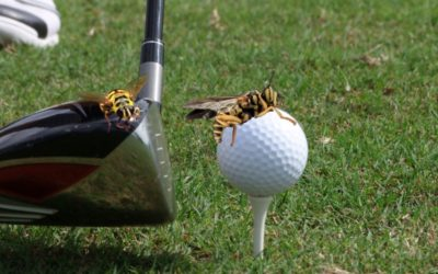 Golf Course Sued after Yellow Jacket Attack